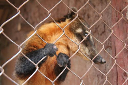 Ccochahuasi-Animal-Sanctuary11