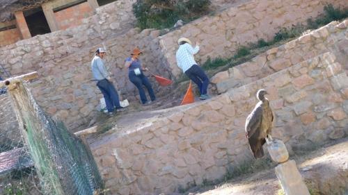 Condor supervising